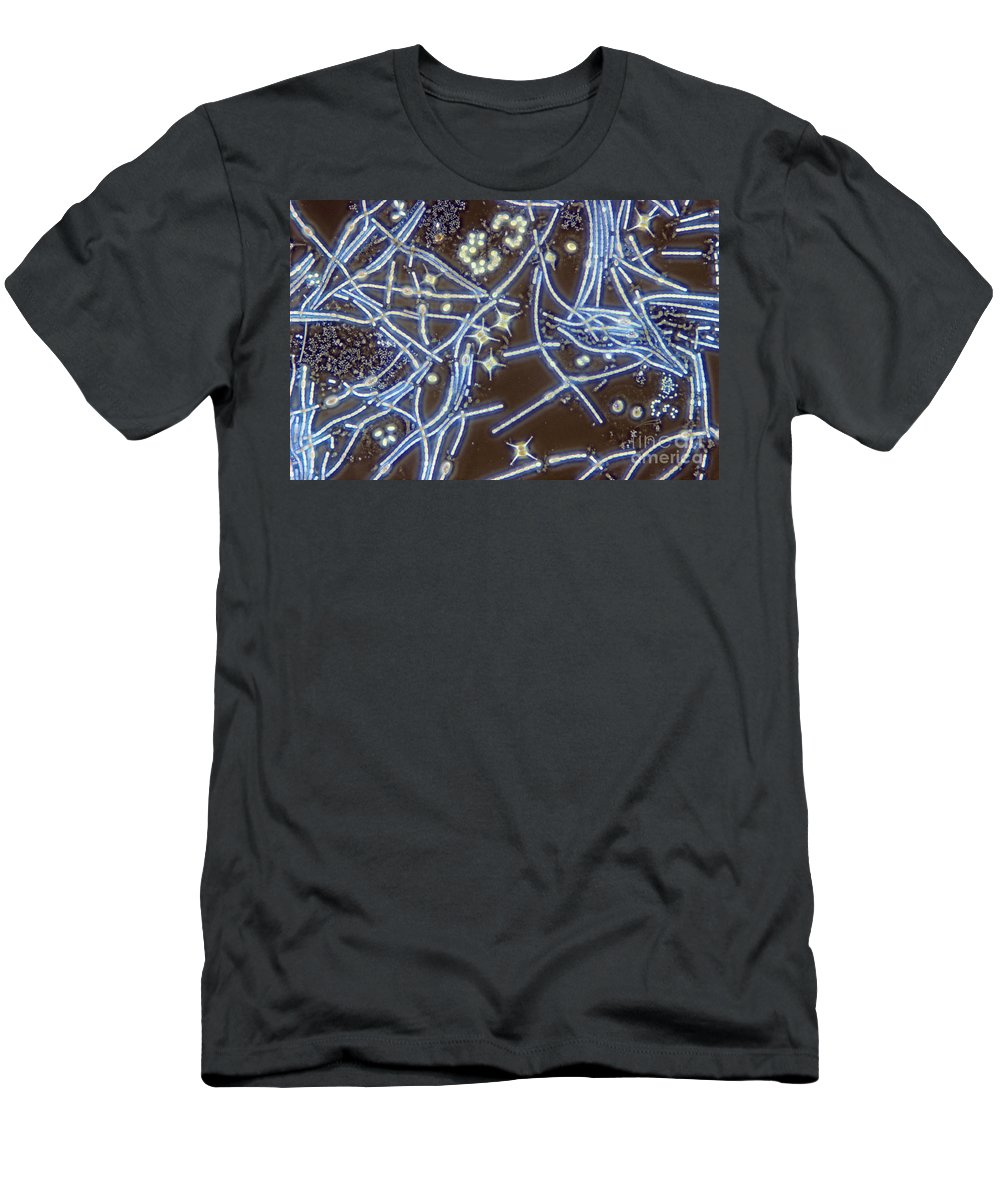 Anoptral Contrast Microscope Men's T-Shirt (Athletic Fit) featuring the photograph Anabaena Staurastrum Anoptral Contrast by M I Walker