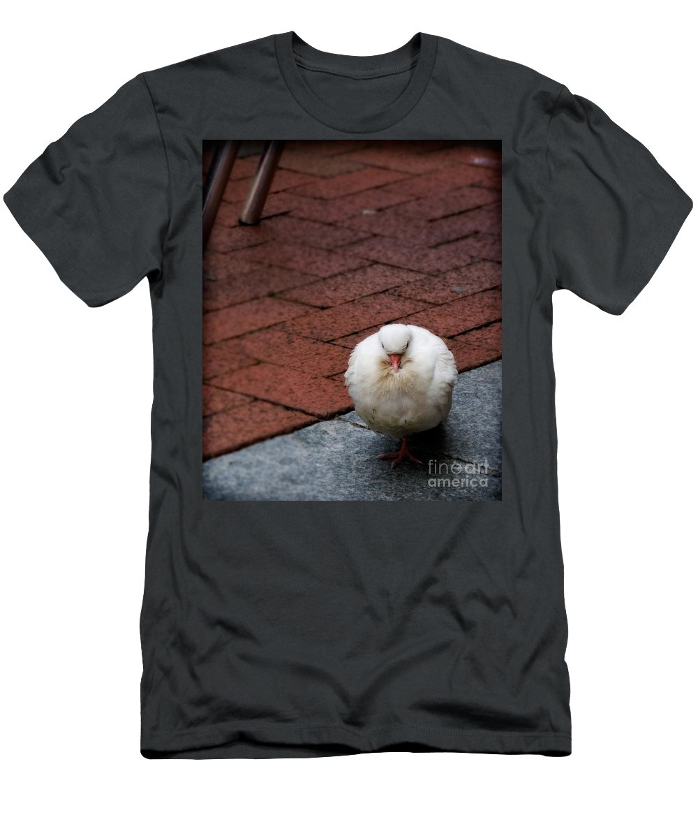 Bird Men's T-Shirt (Athletic Fit) featuring the photograph Angel Of The City by Jay Taylor