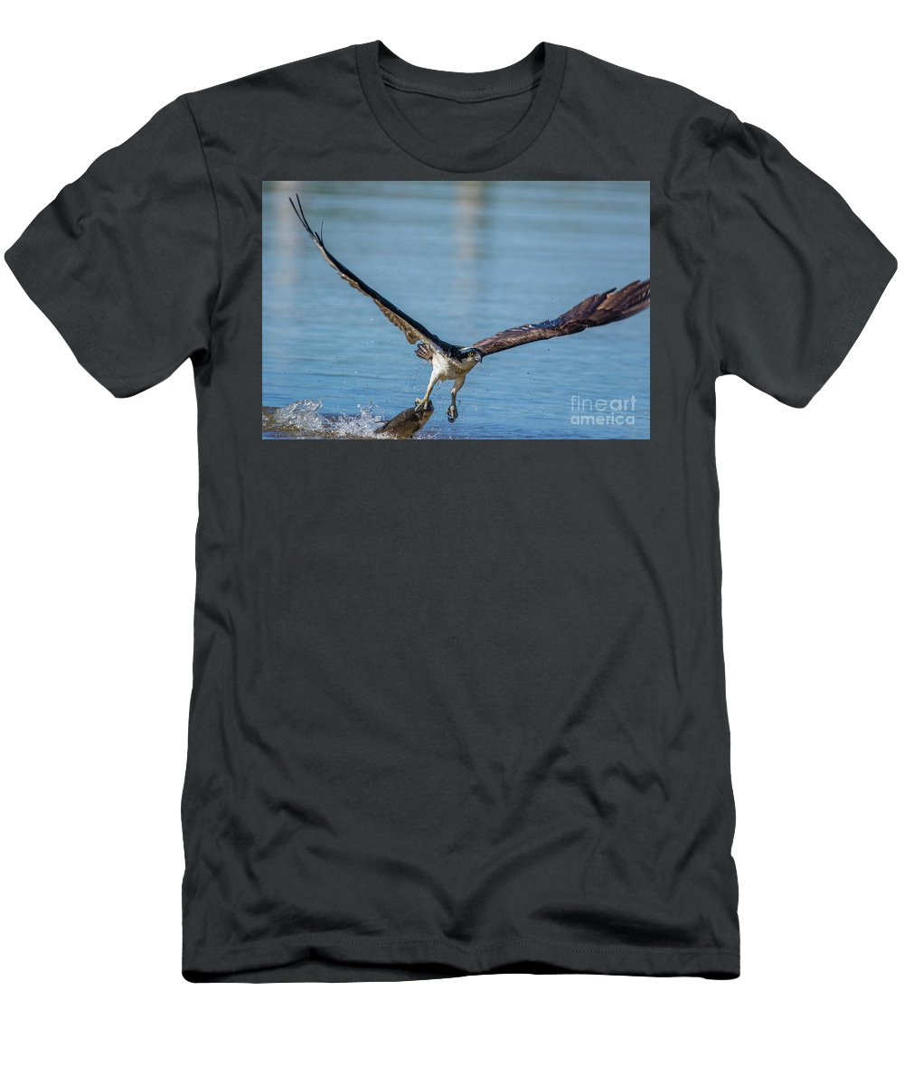 Osprey Men's T-Shirt (Athletic Fit) featuring the photograph Animal - Bird - Osprey Catching A Fish by CJ Park