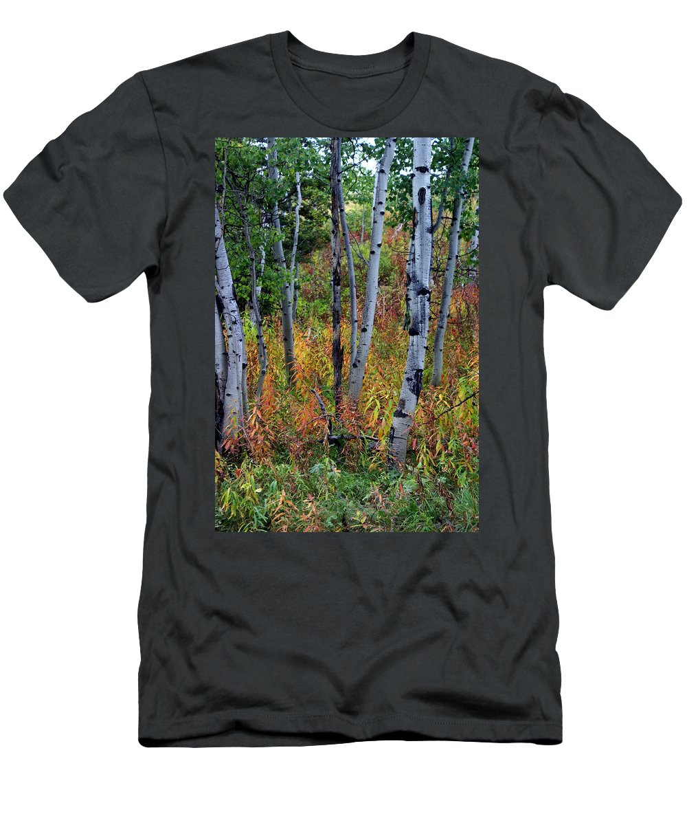 Grand Teton National Park Men's T-Shirt (Athletic Fit) featuring the photograph Aspen In Fall by Marty Koch