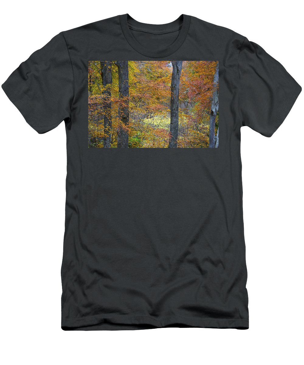 Fall Men's T-Shirt (Athletic Fit) featuring the photograph Autumn Colours by Phil Crean