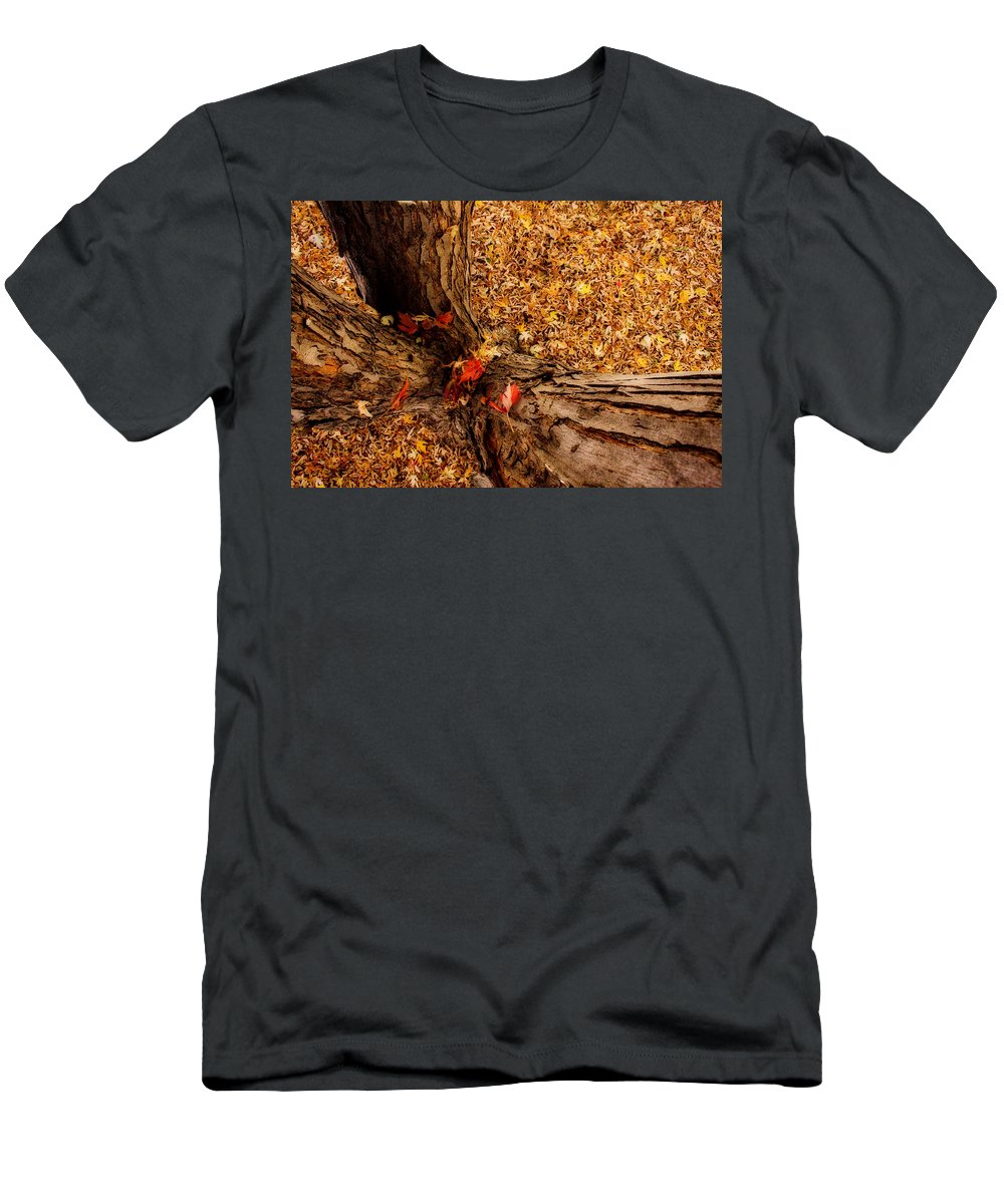 Maple Tree Men's T-Shirt (Athletic Fit) featuring the photograph Autumn Fall Dream by James BO Insogna