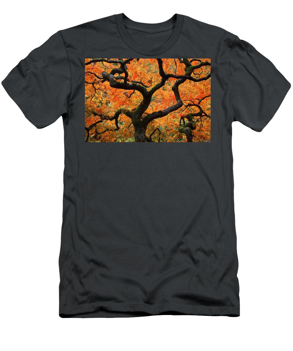 Autumn Men's T-Shirt (Athletic Fit) featuring the photograph Autumn Maple by Eggers Photography
