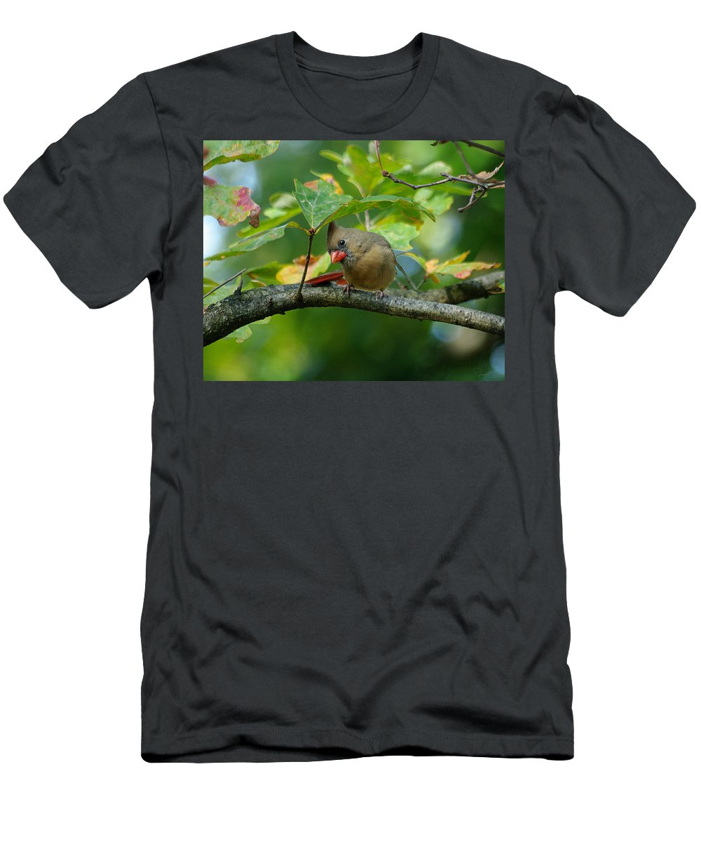Jenny Gandert Men's T-Shirt (Athletic Fit) featuring the photograph Available Shelter by Jenny Gandert