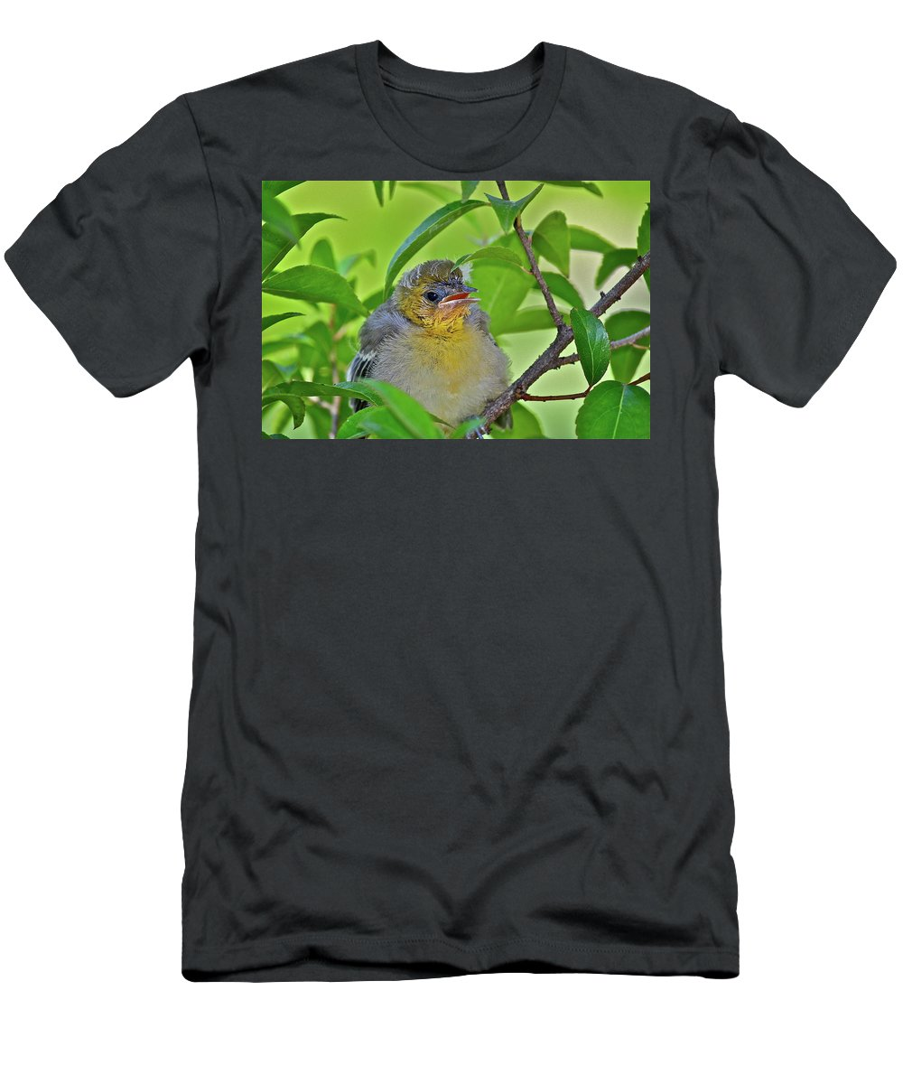 Birds T-Shirt featuring the photograph Baby Oriole by Diana Hatcher