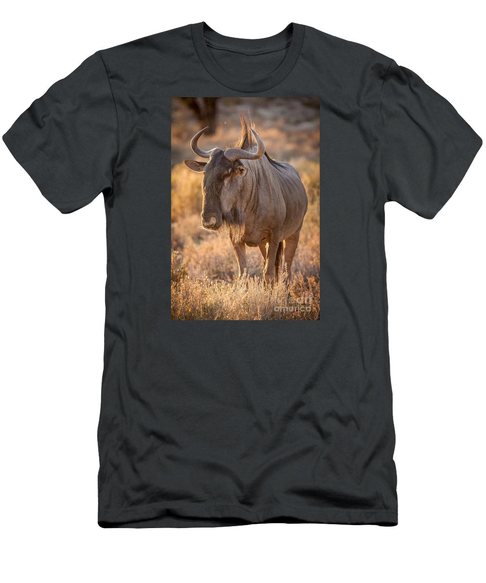 African Wildlife Men's T-Shirt (Athletic Fit) featuring the photograph Backlight Wildebeest by Stephan Olivier