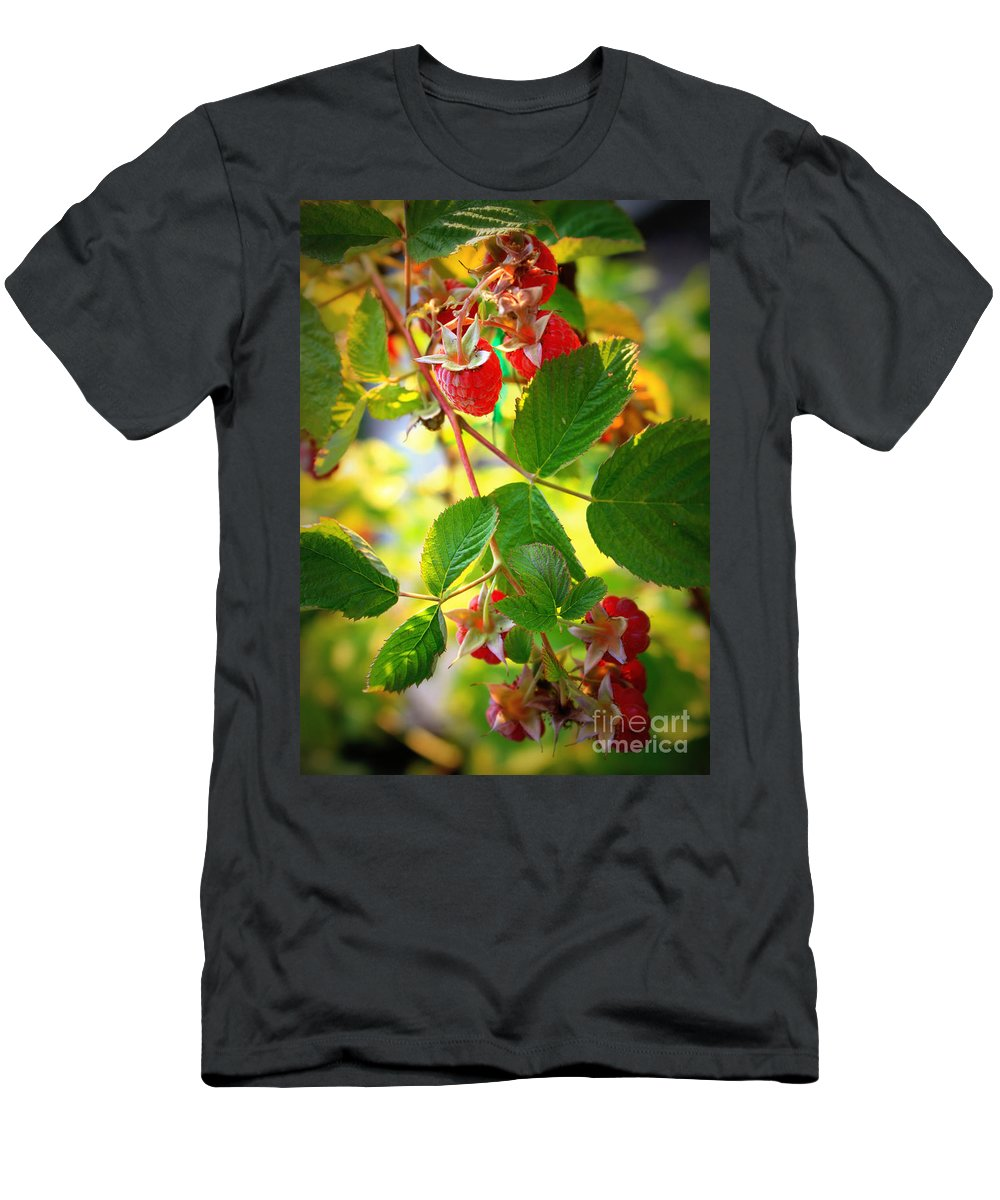 Fresh Fruit Men's T-Shirt (Athletic Fit) featuring the photograph Backyard Garden Series - Sunlight On Raspberries by Carol Groenen