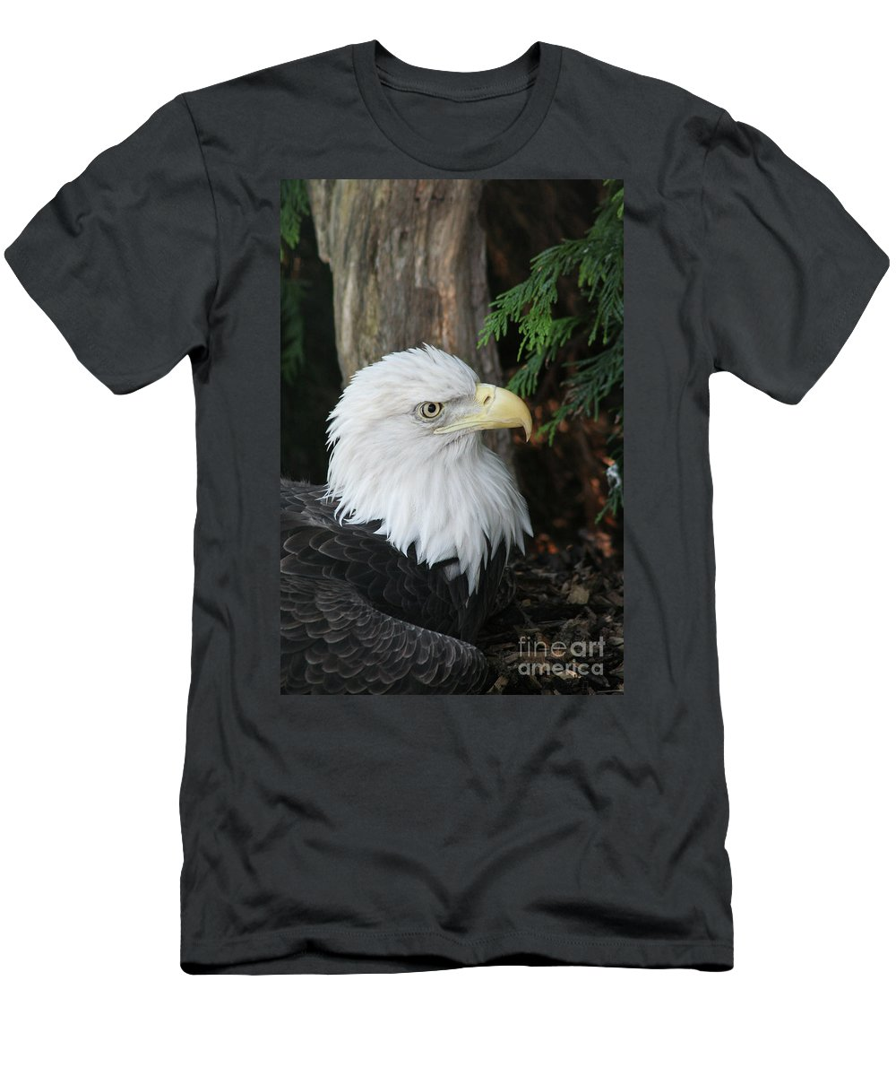 Bald Eagle Men's T-Shirt (Athletic Fit) featuring the photograph Bald Eagle #8 by Judy Whitton