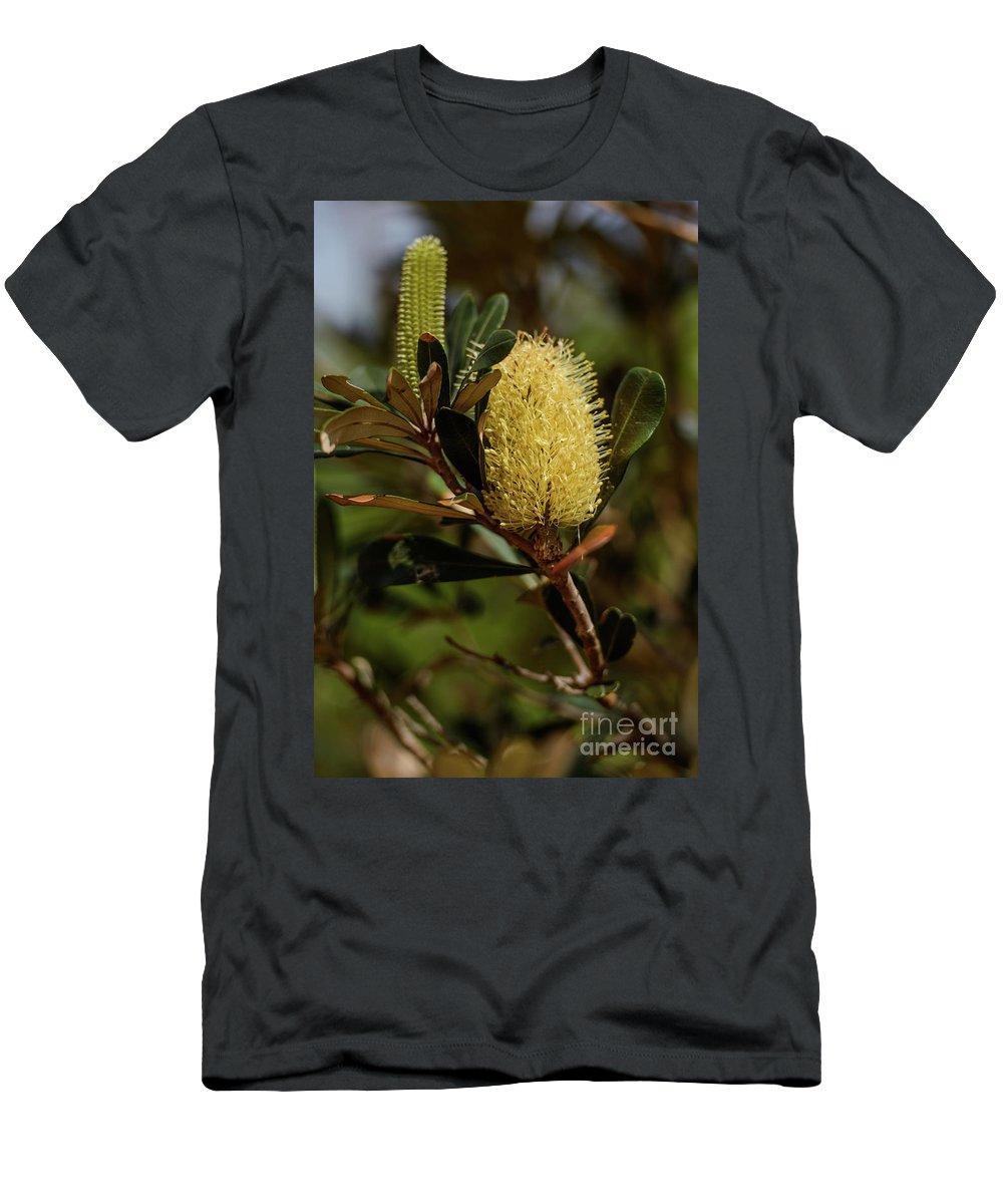 Coastal Banksia Men's T-Shirt (Athletic Fit) featuring the photograph Banksia Syd01 by Werner Padarin