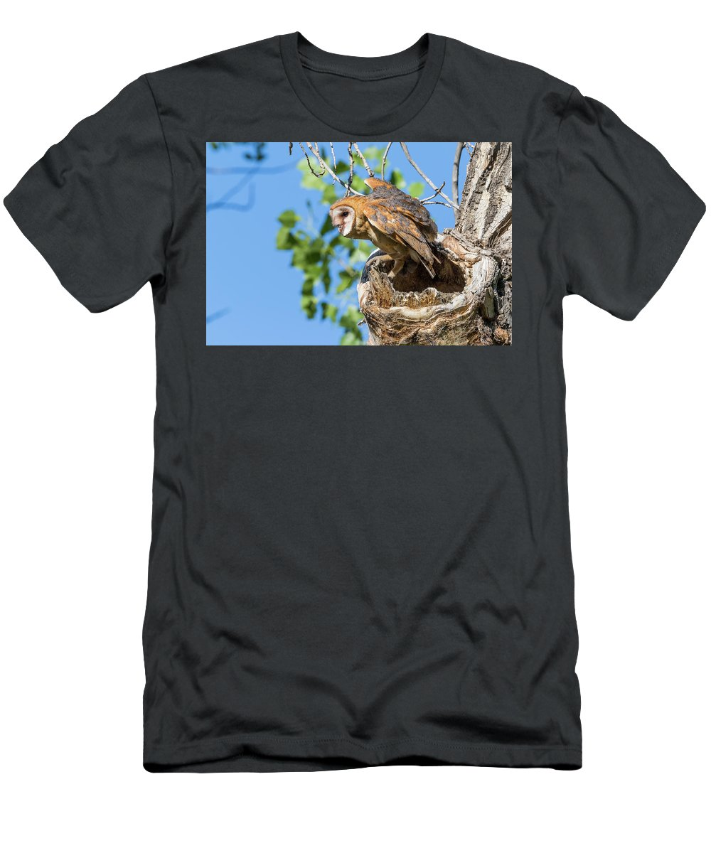 Barn Owl Men's T-Shirt (Athletic Fit) featuring the photograph Barn Owl Owlet Climbs Out Of Nest by Tony Hake