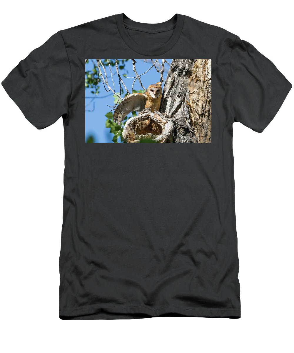 Barn Owl Men's T-Shirt (Athletic Fit) featuring the photograph Barn Owl Owlet Stretches by Tony Hake