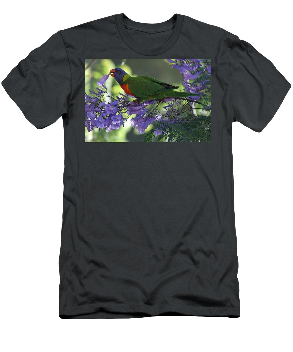 Parrot Men's T-Shirt (Athletic Fit) featuring the photograph Beautiful Lorikeet by Brian Leverton