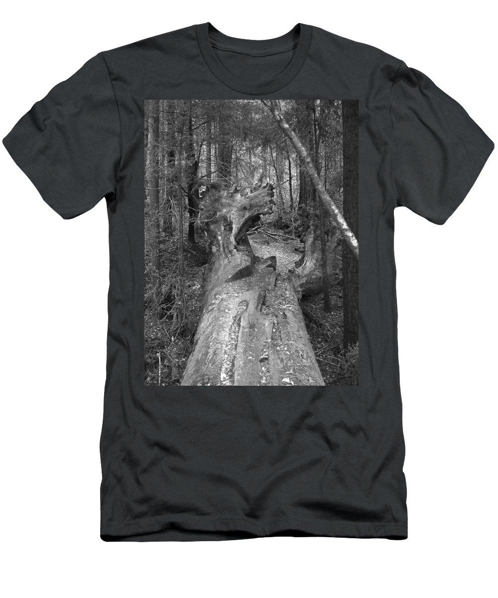 Landscape Men's T-Shirt (Athletic Fit) featuring the photograph Big Basin 2 by Karen W Meyer