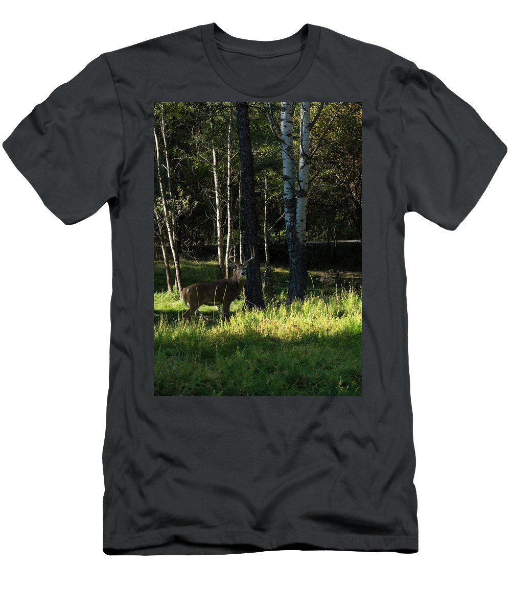 Deer T-Shirt featuring the photograph Big Buck by Roy Nierdieck