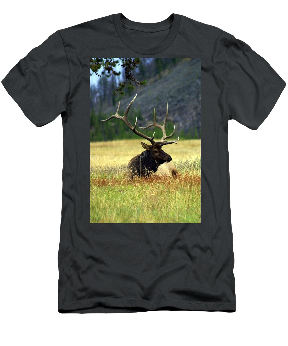Men's T-Shirt (Athletic Fit) featuring the photograph Big Bull 2 by Marty Koch