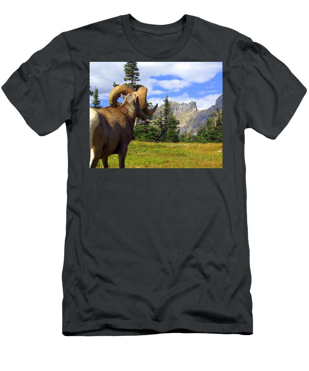 Glacier National Park Men's T-Shirt (Athletic Fit) featuring the photograph Big Horn 3 by Marty Koch