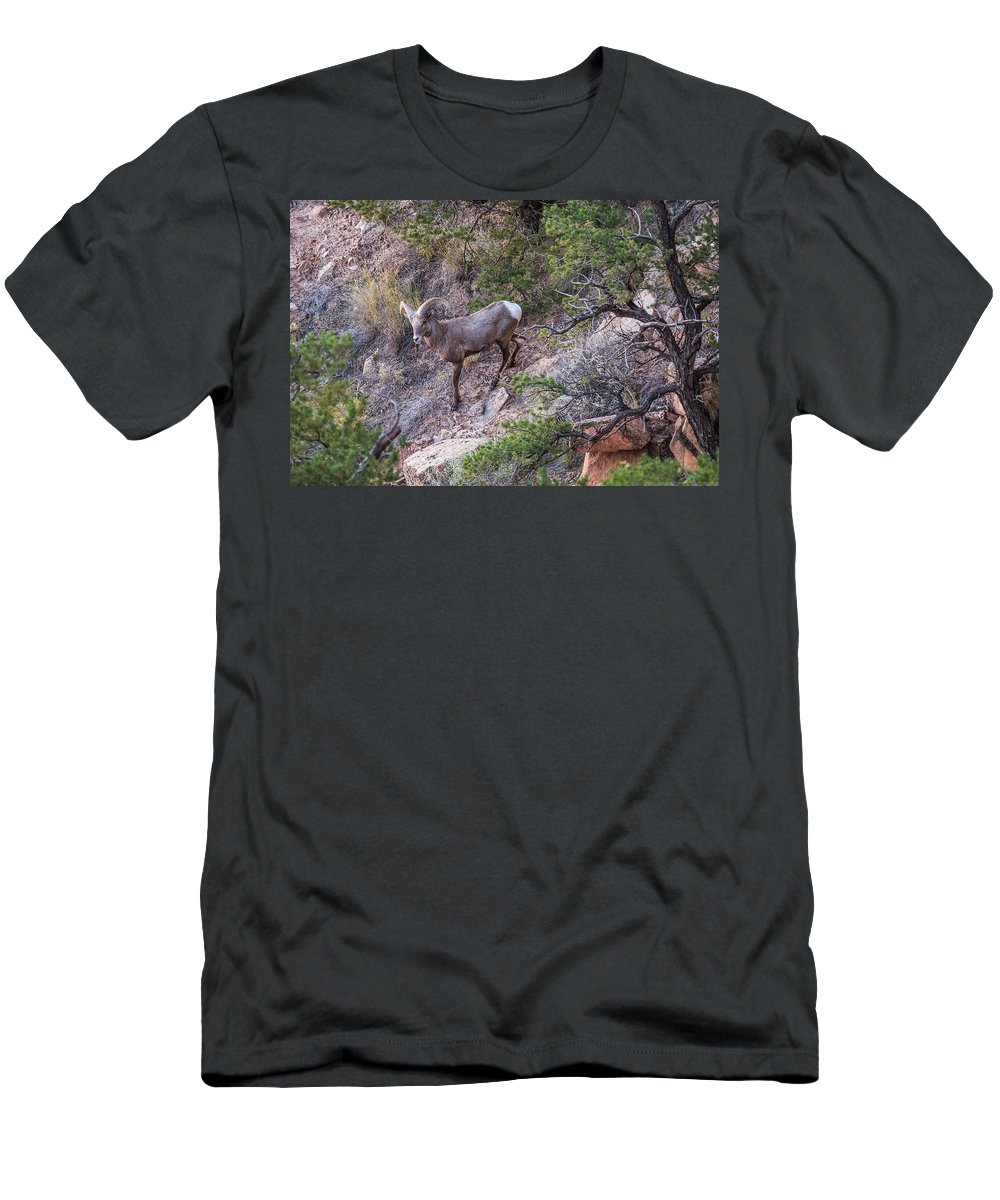 Big Men's T-Shirt (Athletic Fit) featuring the photograph Big Horned Ram by Paul Freidlund