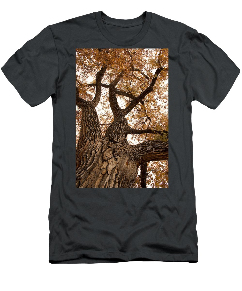 Giant Men's T-Shirt (Athletic Fit) featuring the photograph Big Tree by James BO Insogna