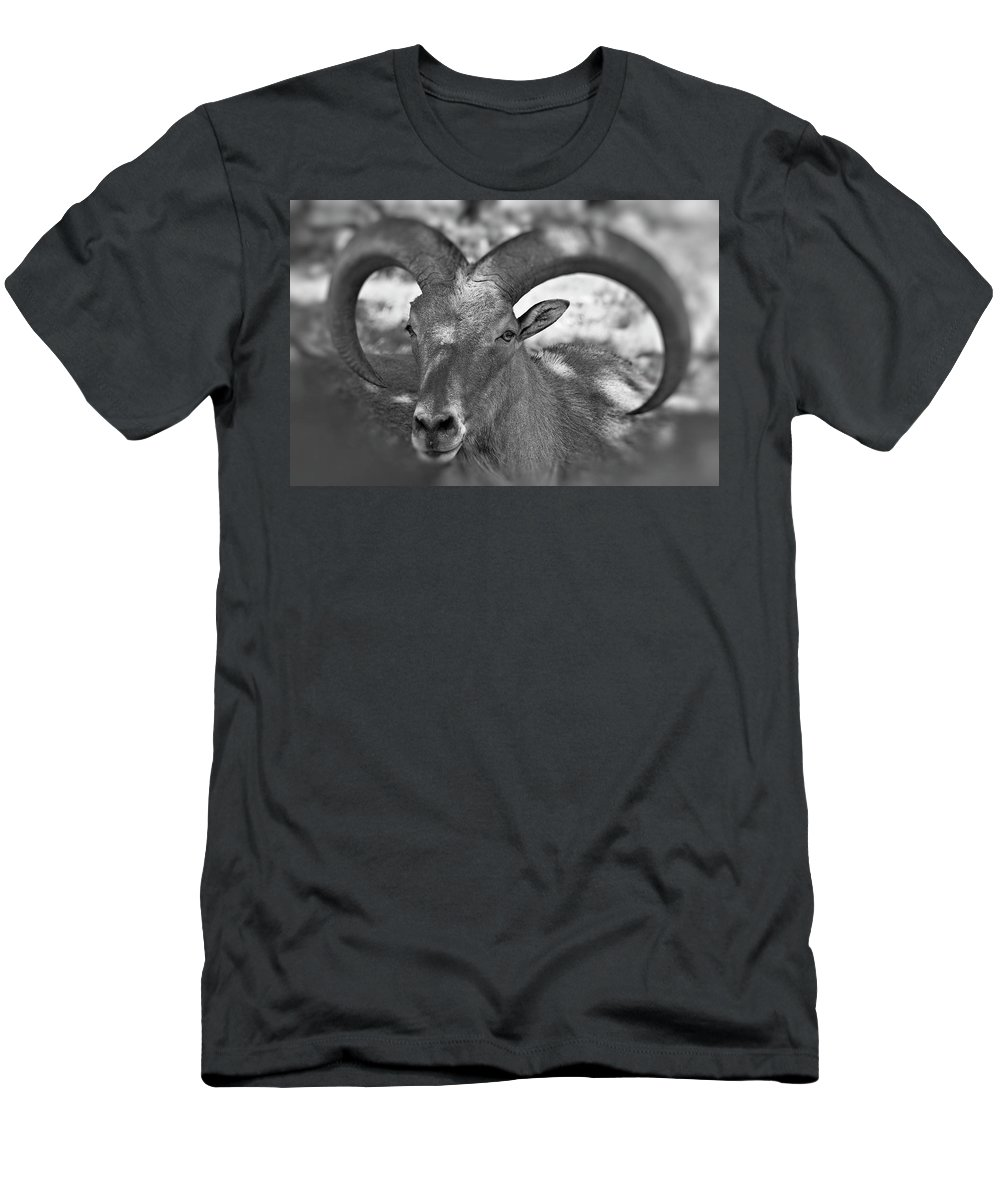 Antelope Men's T-Shirt (Athletic Fit) featuring the photograph Bighorn by Douglas Barnard