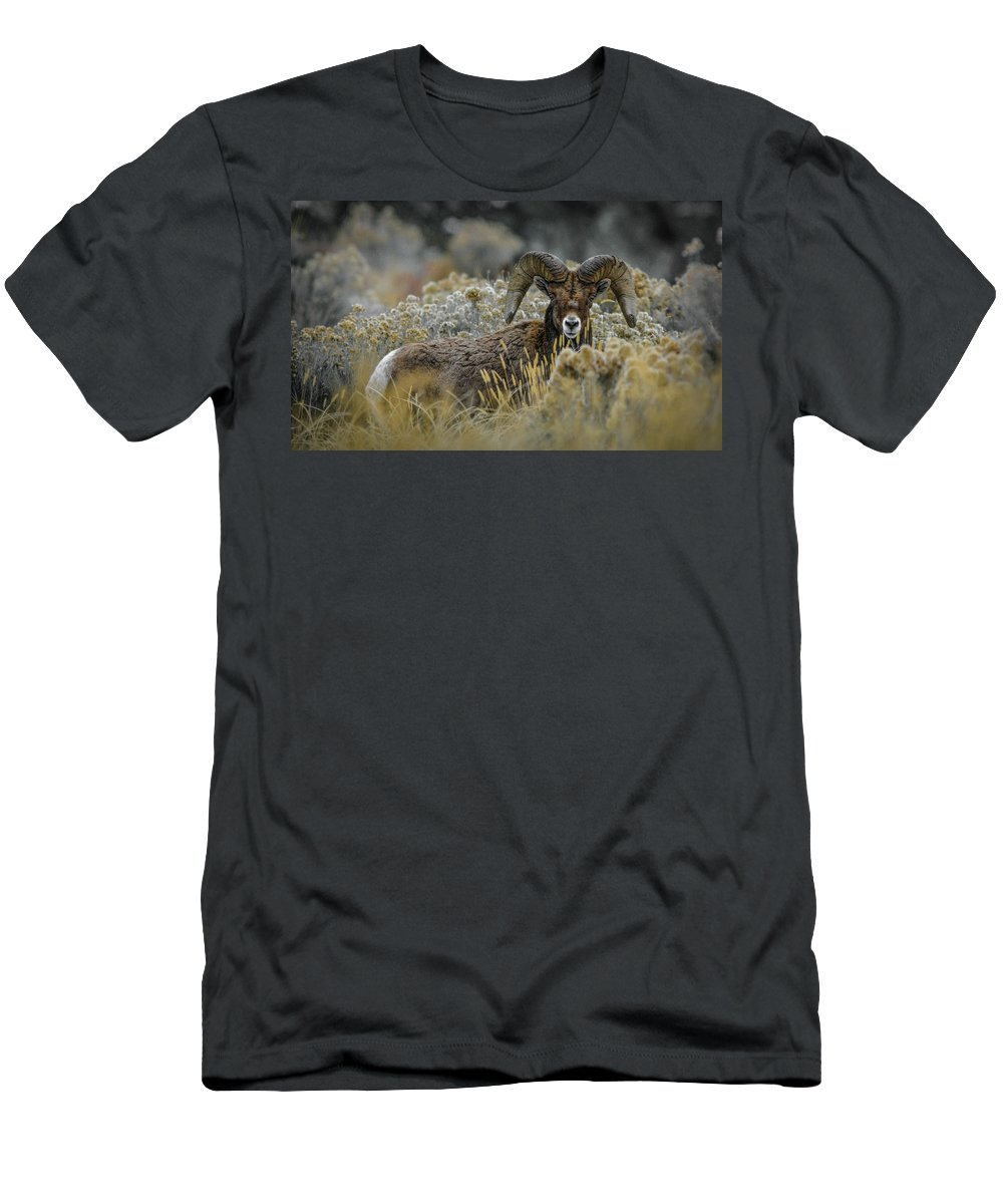 Bighorn Sheep T-Shirt featuring the photograph Bighorn in Sage by Jason Brooks