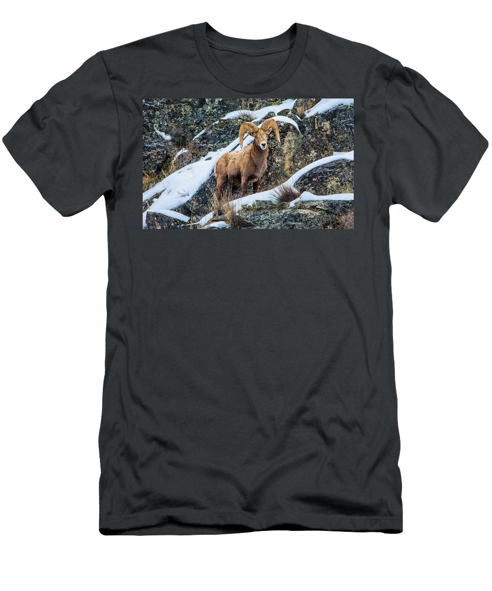 Bighorn Sheep T-Shirt featuring the photograph Bighorn Ram 3 by Jason Brooks