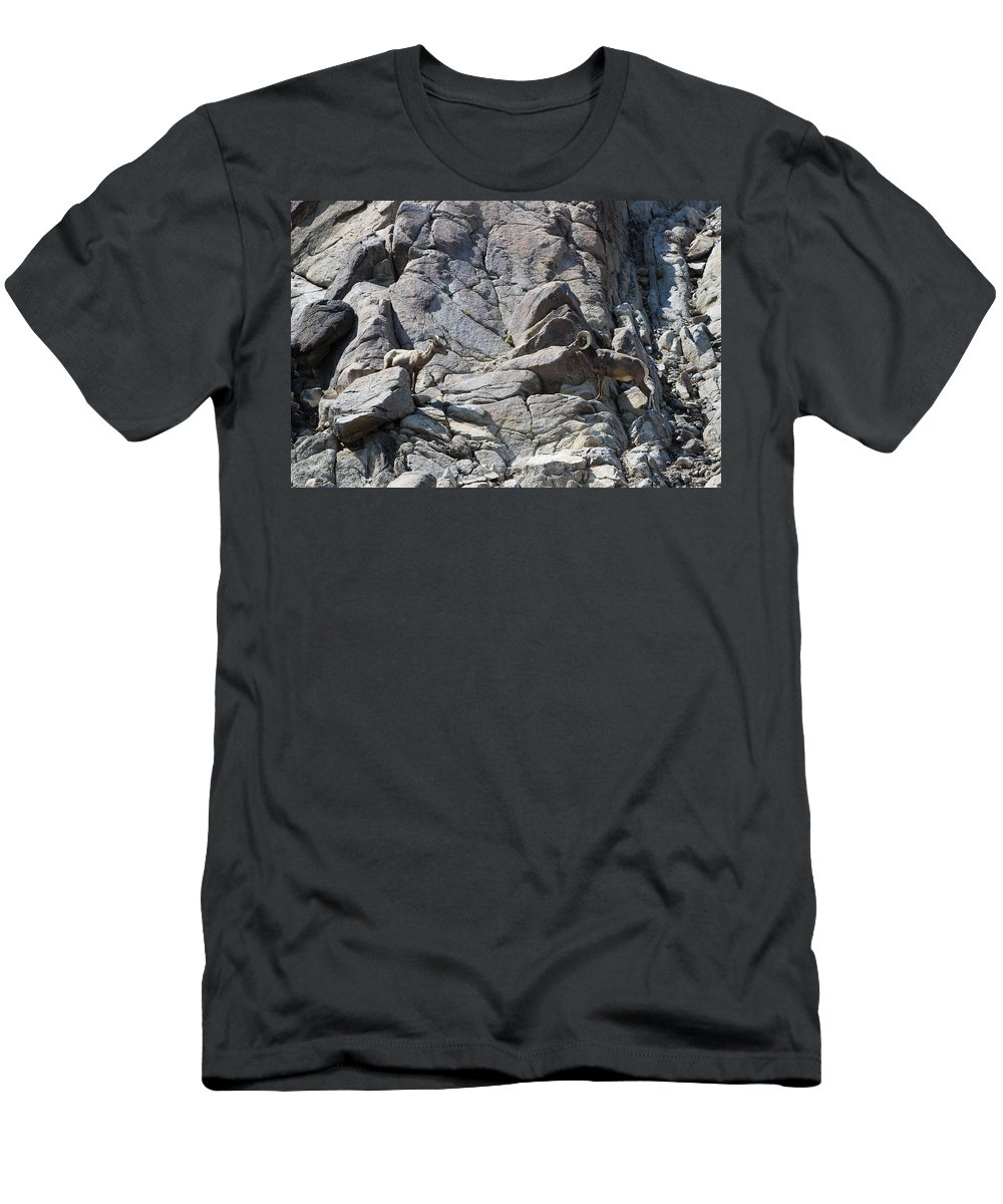 Bighorn Sheep Ram Men's T-Shirt (Athletic Fit) featuring the photograph Bighorns Romantic Stare by Colleen Cornelius