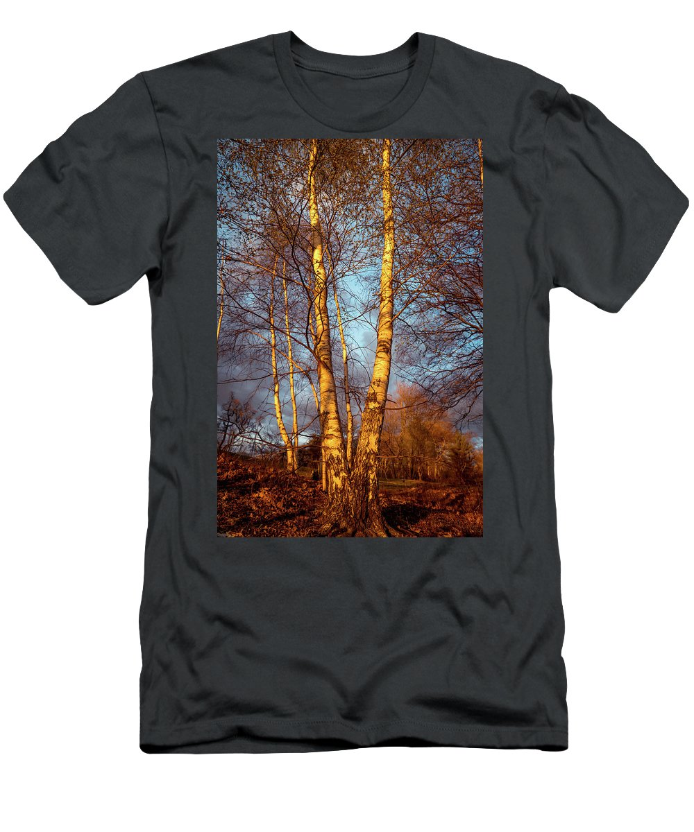 Birch Men's T-Shirt (Athletic Fit) featuring the photograph Birch Tree In Golden Hour by Lilia D
