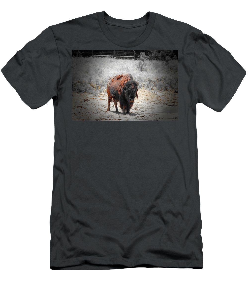 Buffalo Men's T-Shirt (Athletic Fit) featuring the photograph Bison by Douglas Barnard