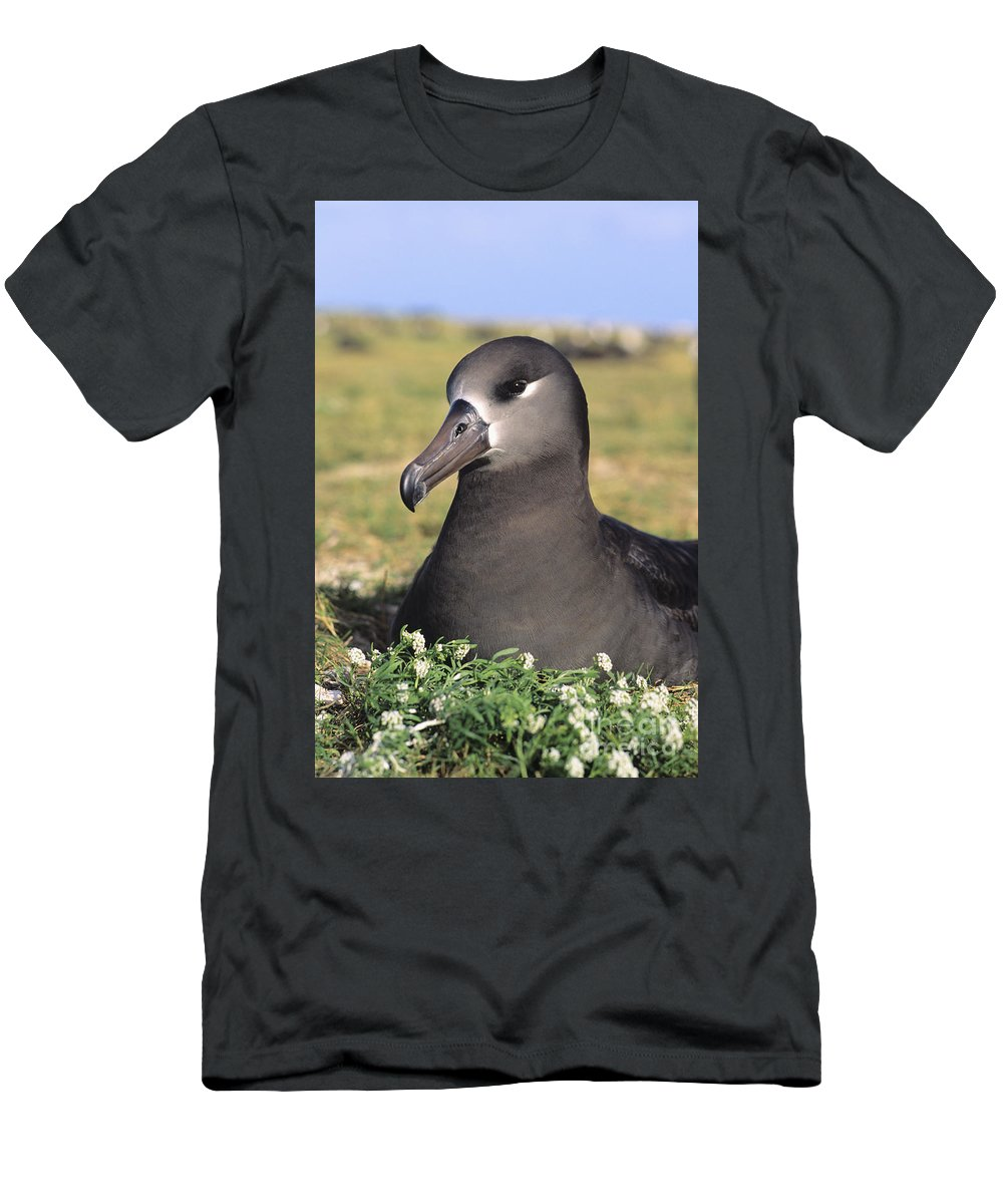 Albatross Men's T-Shirt (Athletic Fit) featuring the photograph Black Footed Albatross by Reggie David - Printscapes