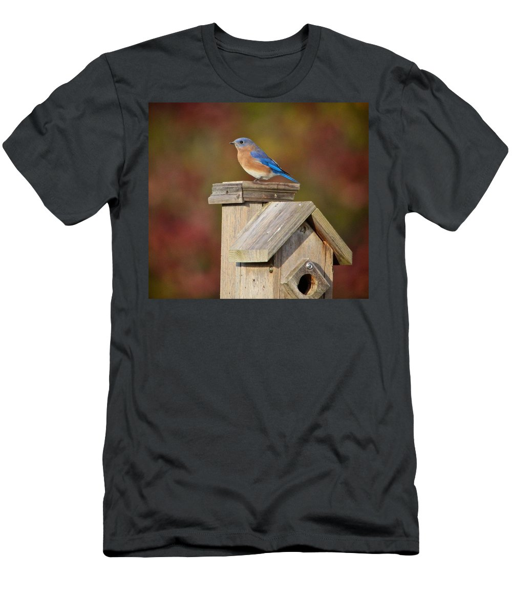 Bird Men's T-Shirt (Athletic Fit) featuring the photograph Blue Bird by Robert Pearson