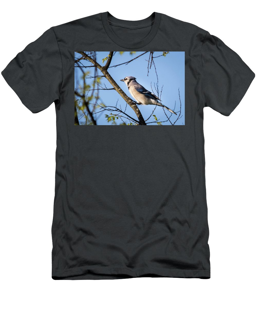 Wildlife Men's T-Shirt (Athletic Fit) featuring the photograph Blue Jay by John Benedict