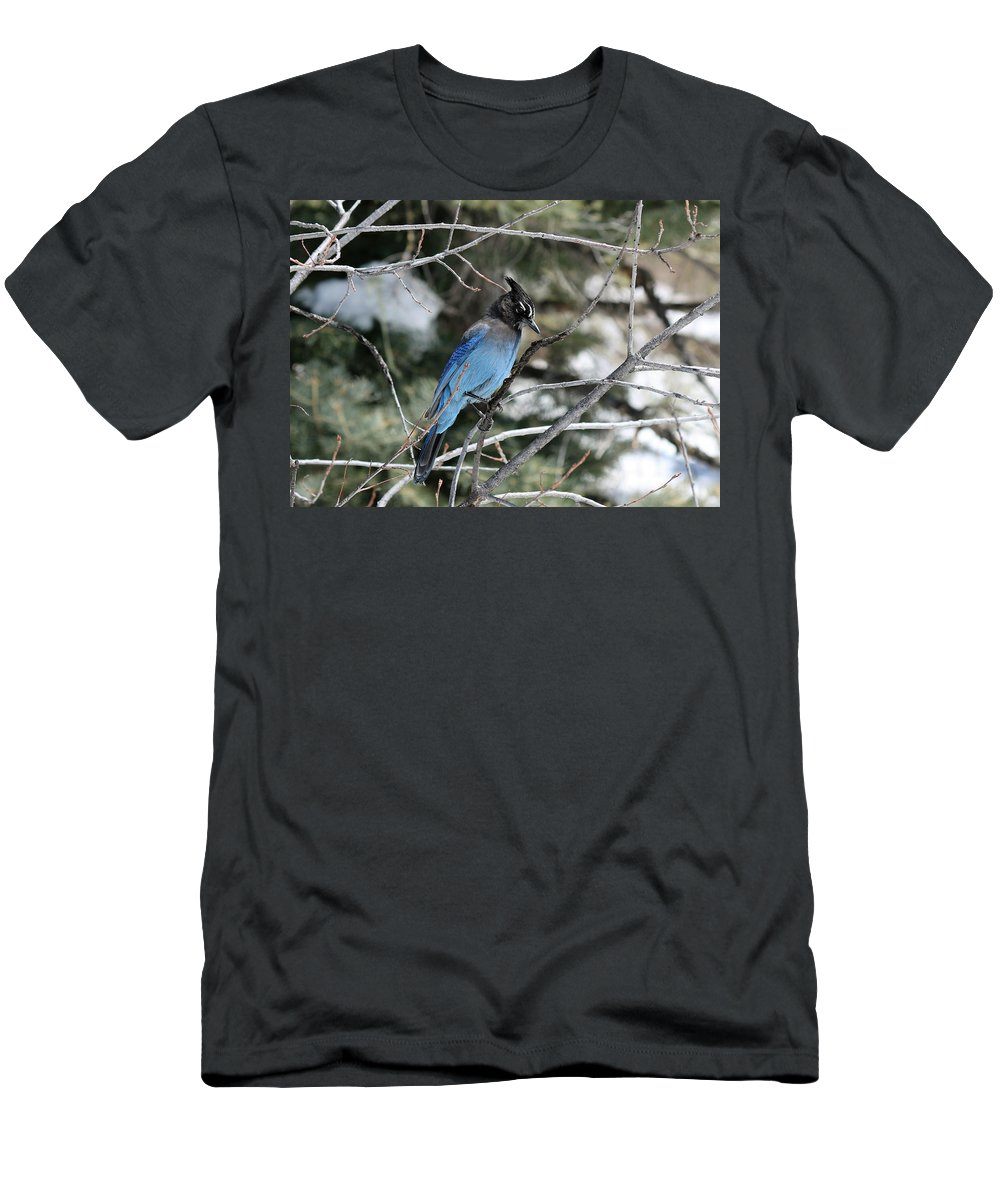 Nature Men's T-Shirt (Athletic Fit) featuring the photograph Blue Jay by Lisa Spero