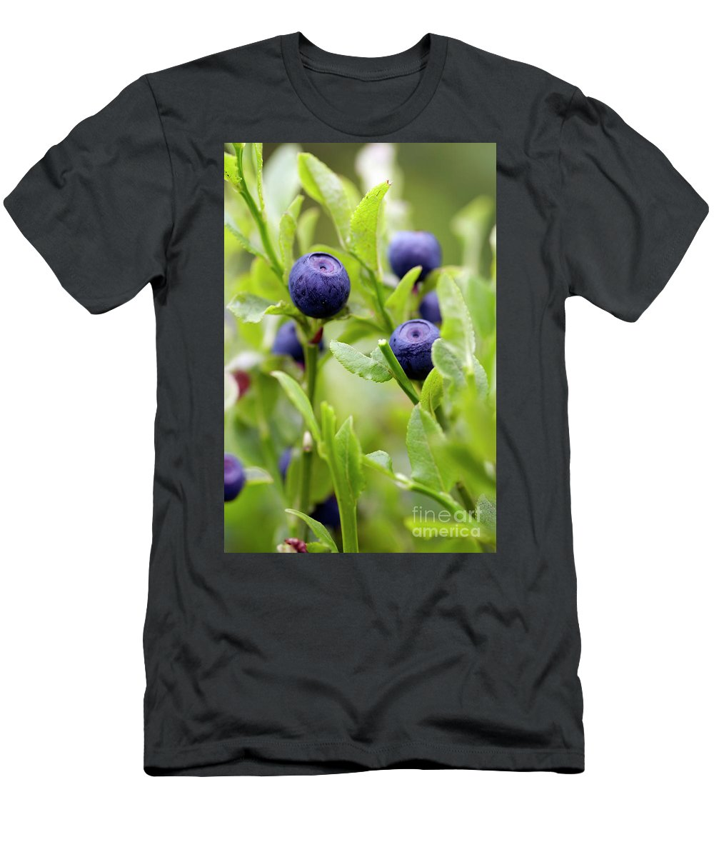 Blueberry Men's T-Shirt (Athletic Fit) featuring the photograph Blueberry Shrubs by Michal Boubin