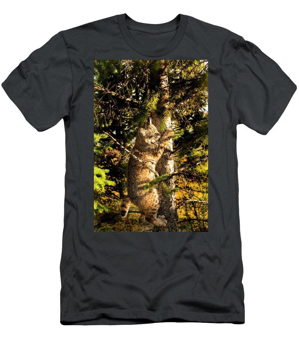 Bobcat T-Shirt featuring the photograph Bobcat up a tree by Roy Nierdieck
