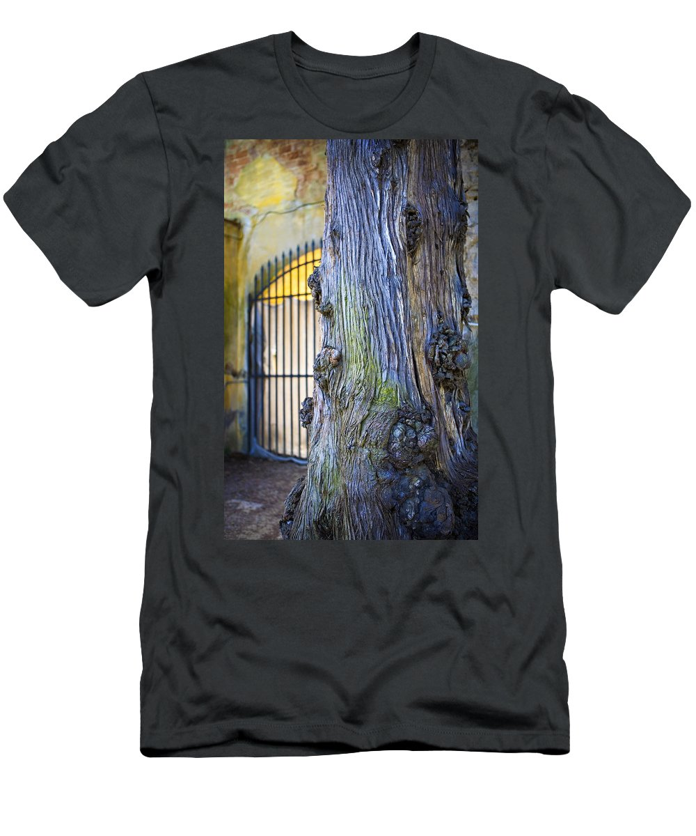 Boboli Men's T-Shirt (Athletic Fit) featuring the photograph Boboli Garden Ancient Tree by Marilyn Hunt