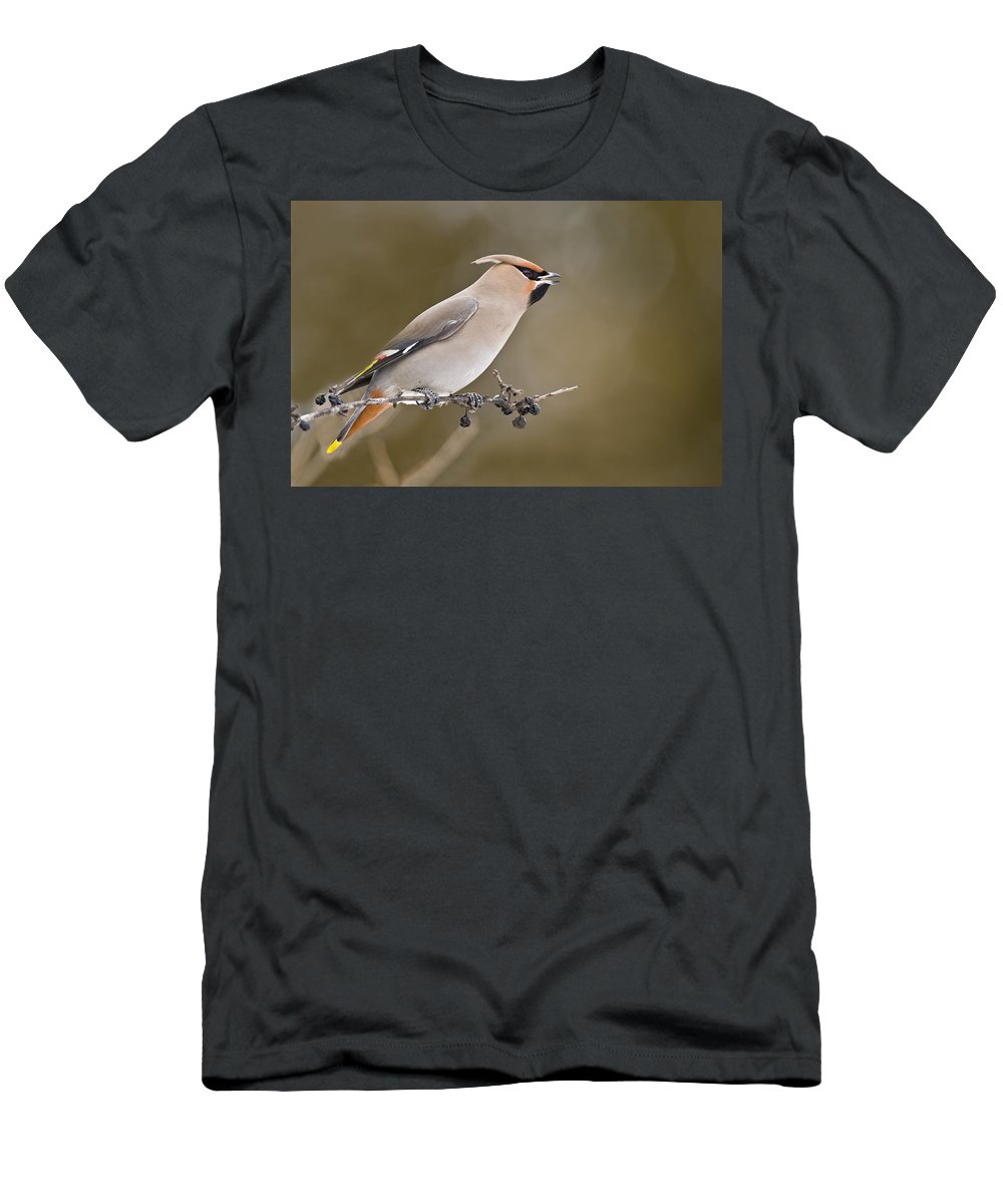Birds Men's T-Shirt (Athletic Fit) featuring the photograph Bohemian Waxwing by Michael Cummings