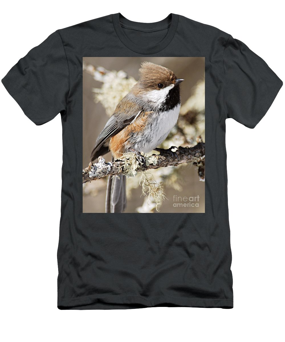 Photography Men's T-Shirt (Athletic Fit) featuring the photograph Boreal Chickadee by Larry Ricker