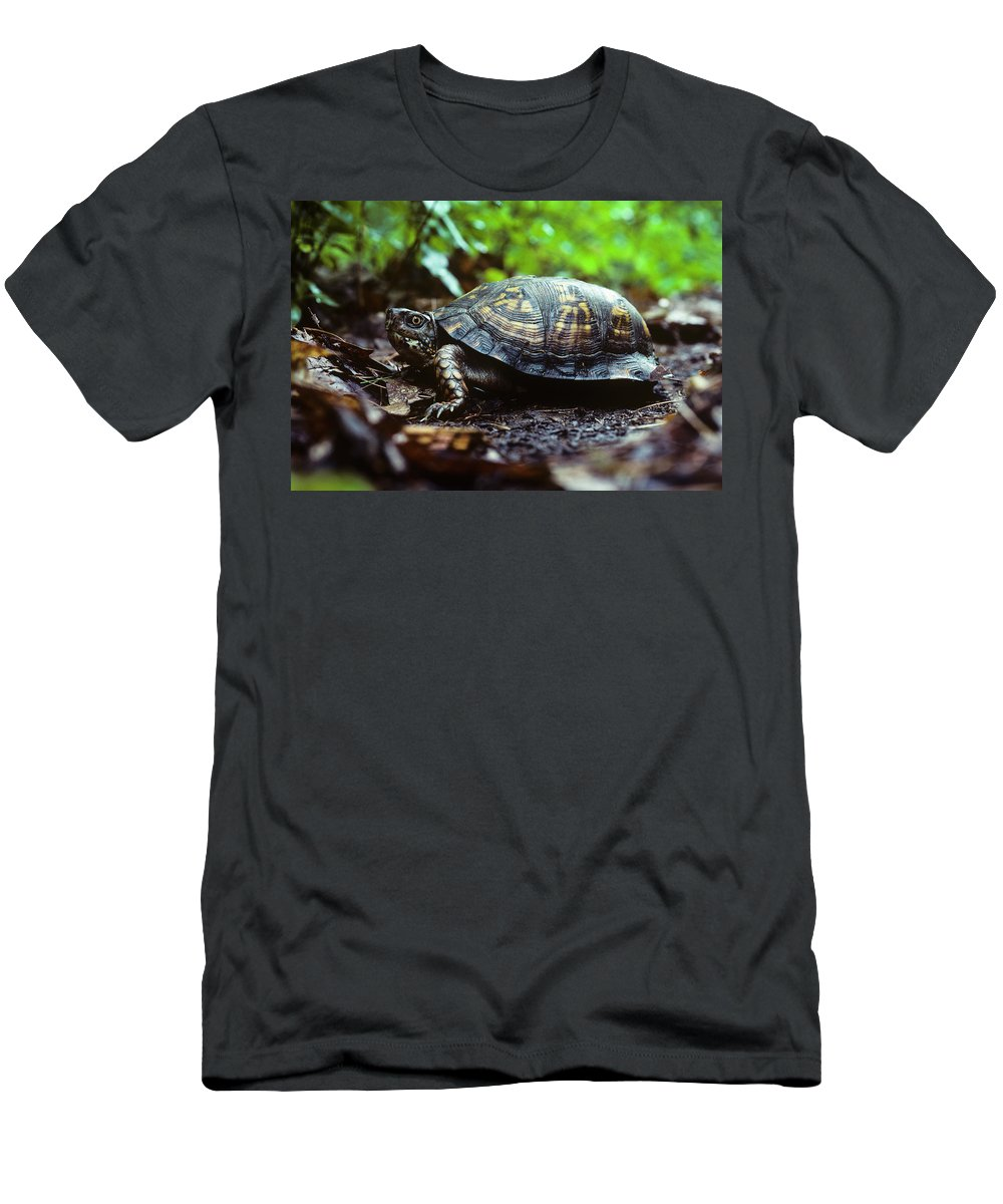Animals Men's T-Shirt (Athletic Fit) featuring the photograph Box Turtle by Robert Potts