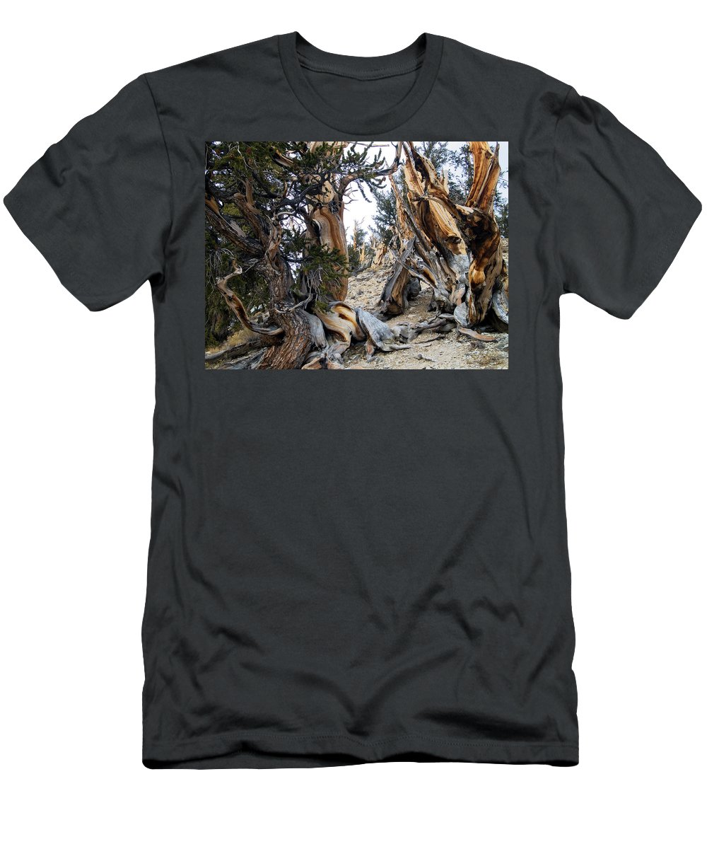 Bristlecones Men's T-Shirt (Athletic Fit) featuring the photograph Bristlecone Forest, Ca November 2105 by Timothy Giller