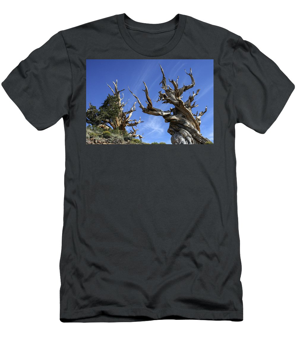 Bristlecone Men's T-Shirt (Athletic Fit) featuring the photograph Bristlecone Trees by Matt Skinner
