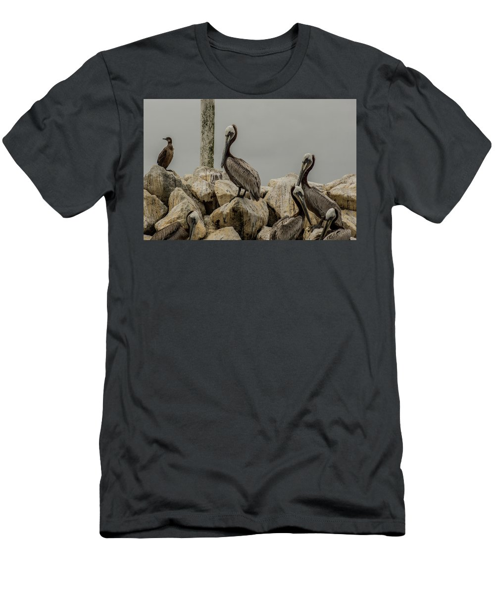 California Coastal Birds Wildlife Men's T-Shirt (Athletic Fit) featuring the photograph Brown Pelican by Donald Pash