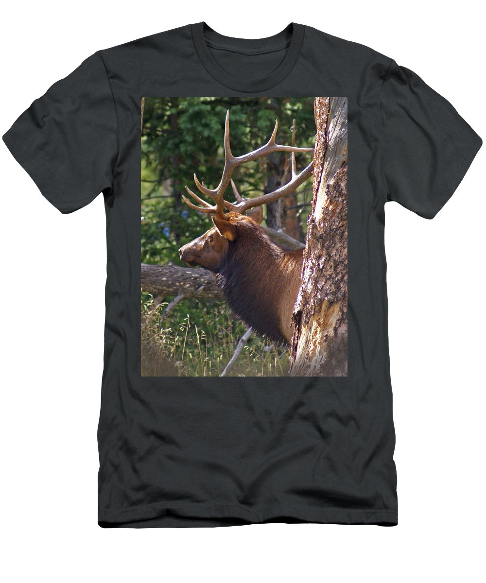 Elk Men's T-Shirt (Athletic Fit) featuring the photograph Bull Elk 2 by Heather Coen