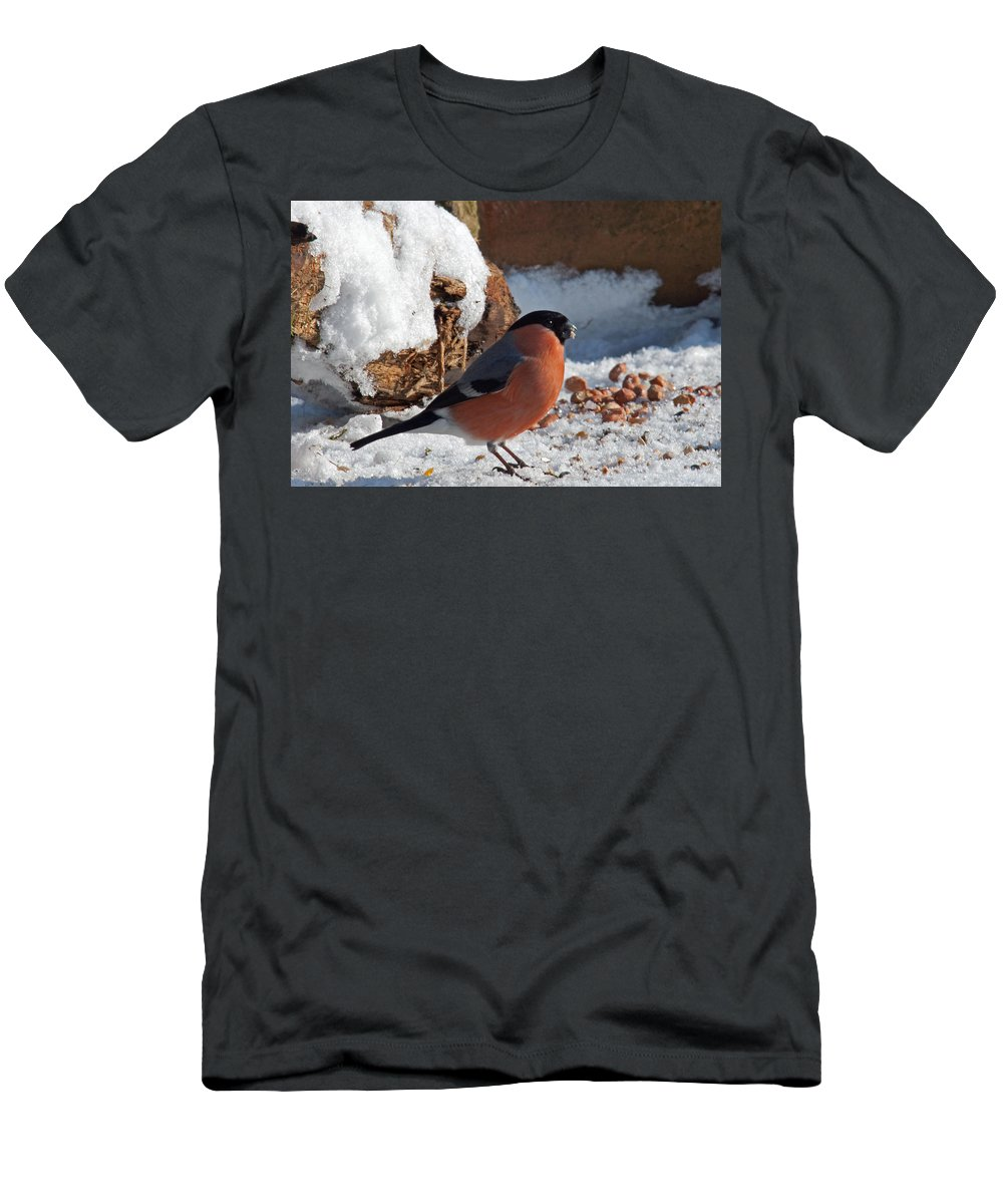 Bullfinch Men's T-Shirt (Athletic Fit) featuring the photograph Bullfinch In The Snow by Bob Kemp