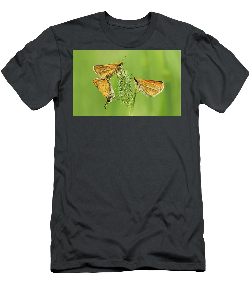 Delaware Men's T-Shirt (Athletic Fit) featuring the photograph Butterflies by Mircea Costina Photography