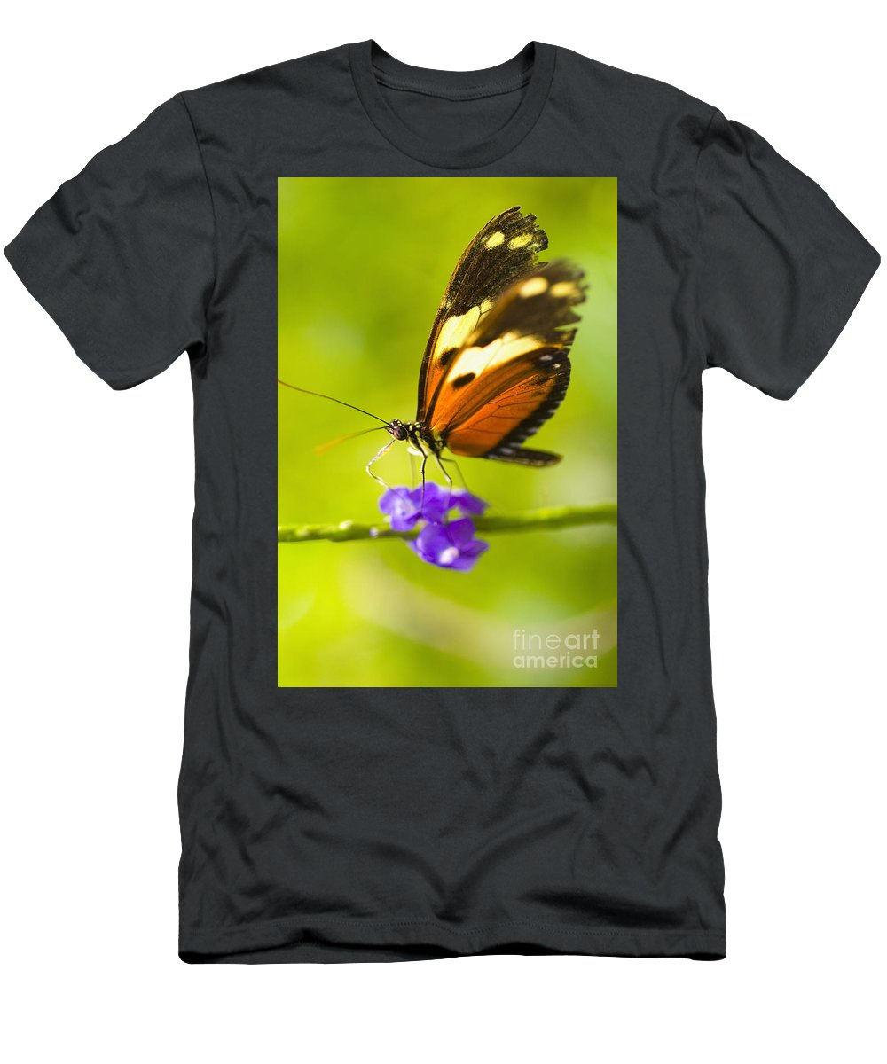 Afternoon Men's T-Shirt (Athletic Fit) featuring the photograph Butterfly On Flower by Tomas del Amo - Printscapes