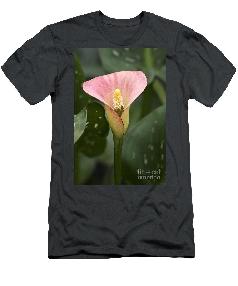 Flower Men's T-Shirt (Athletic Fit) featuring the photograph Calla In The Mist by Deborah Benoit