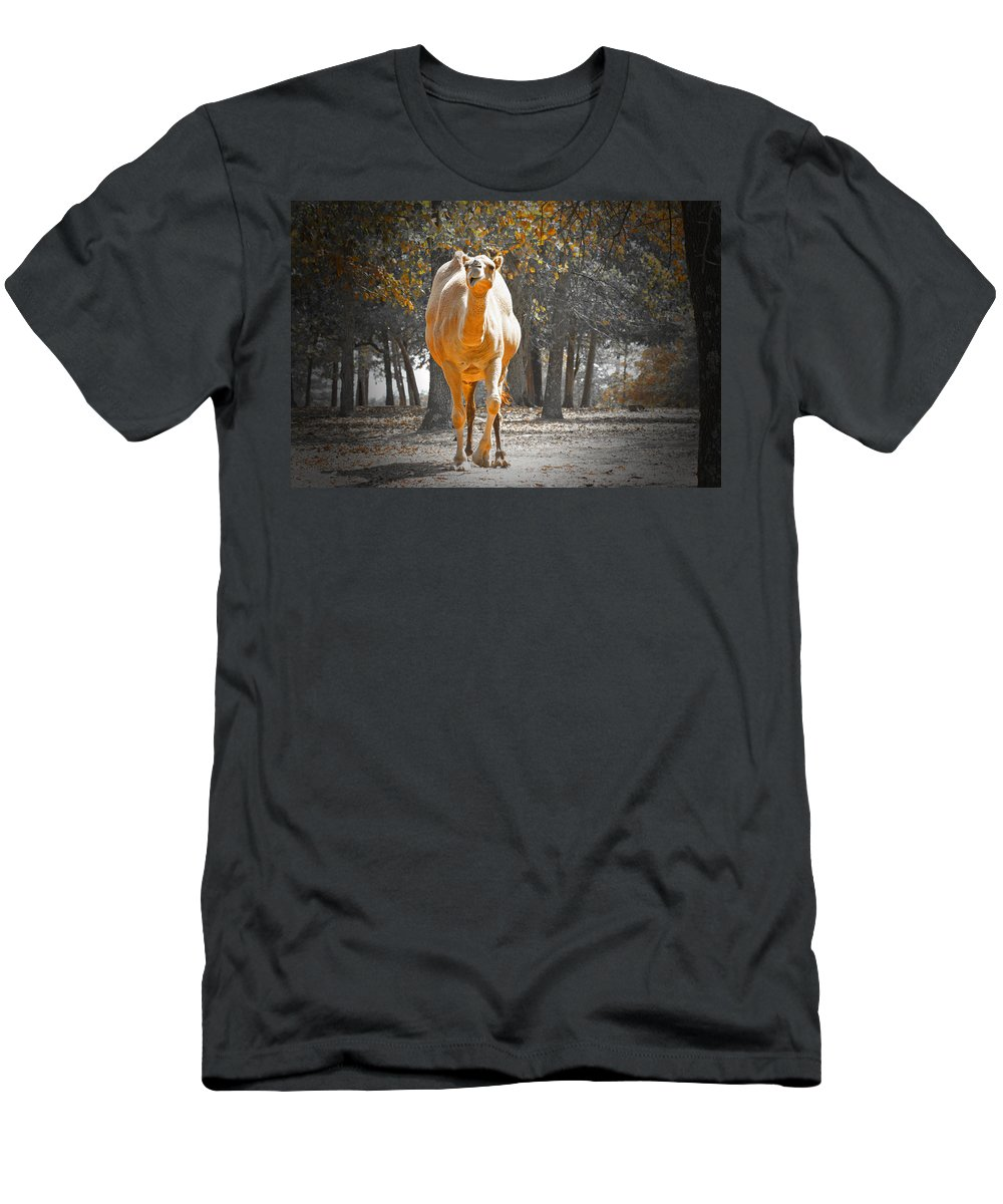 Camel Men's T-Shirt (Athletic Fit) featuring the photograph Camel by Douglas Barnard