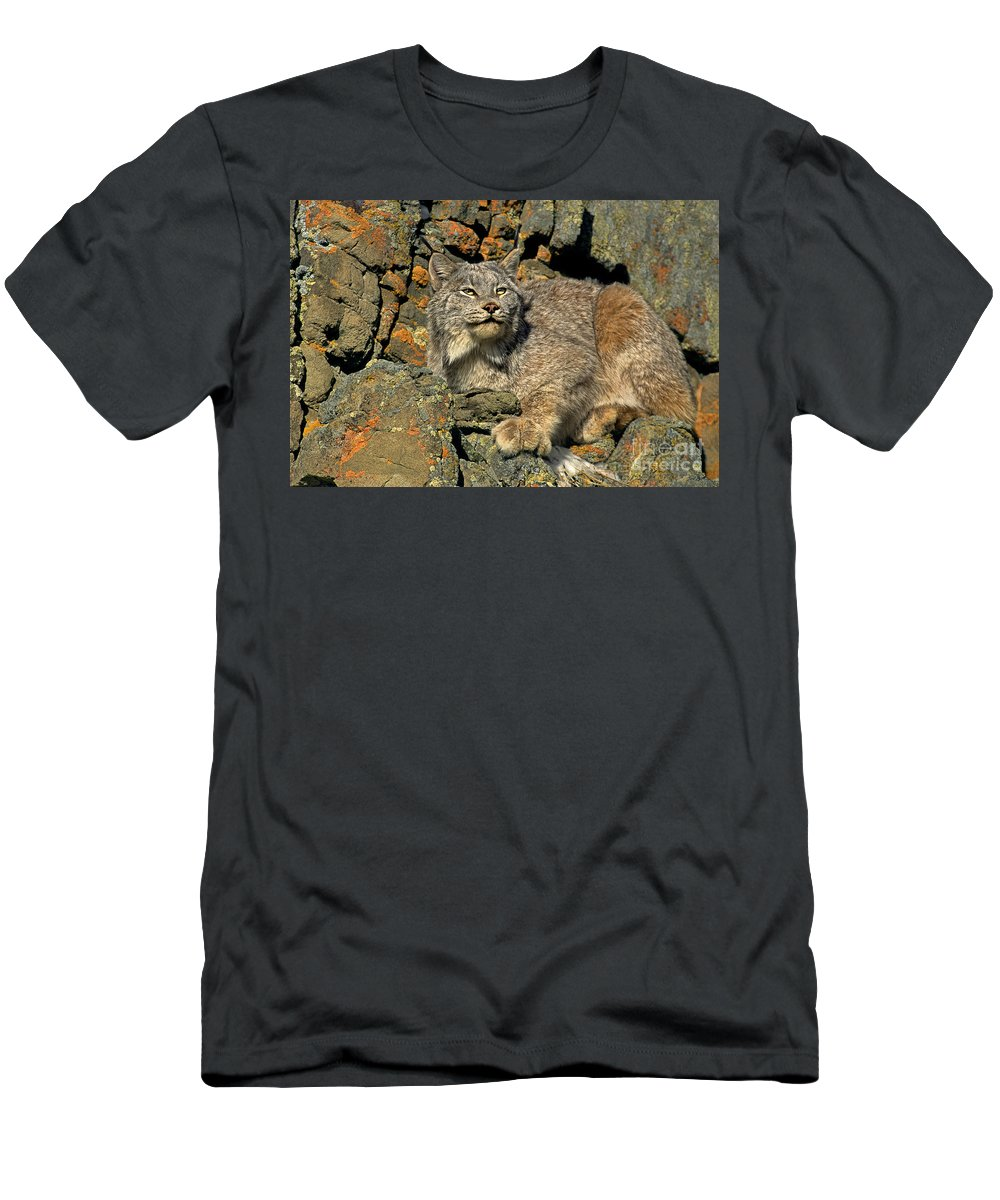 Canadian Lynx Men's T-Shirt (Athletic Fit) featuring the photograph Canadian Lynx On Lichen-covered Cliff Endangered Species by Dave Welling
