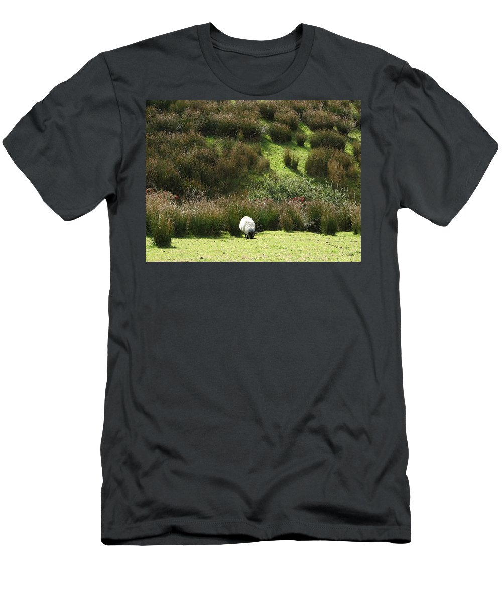 Sheep Men's T-Shirt (Athletic Fit) featuring the photograph Caora by Kelly Mezzapelle