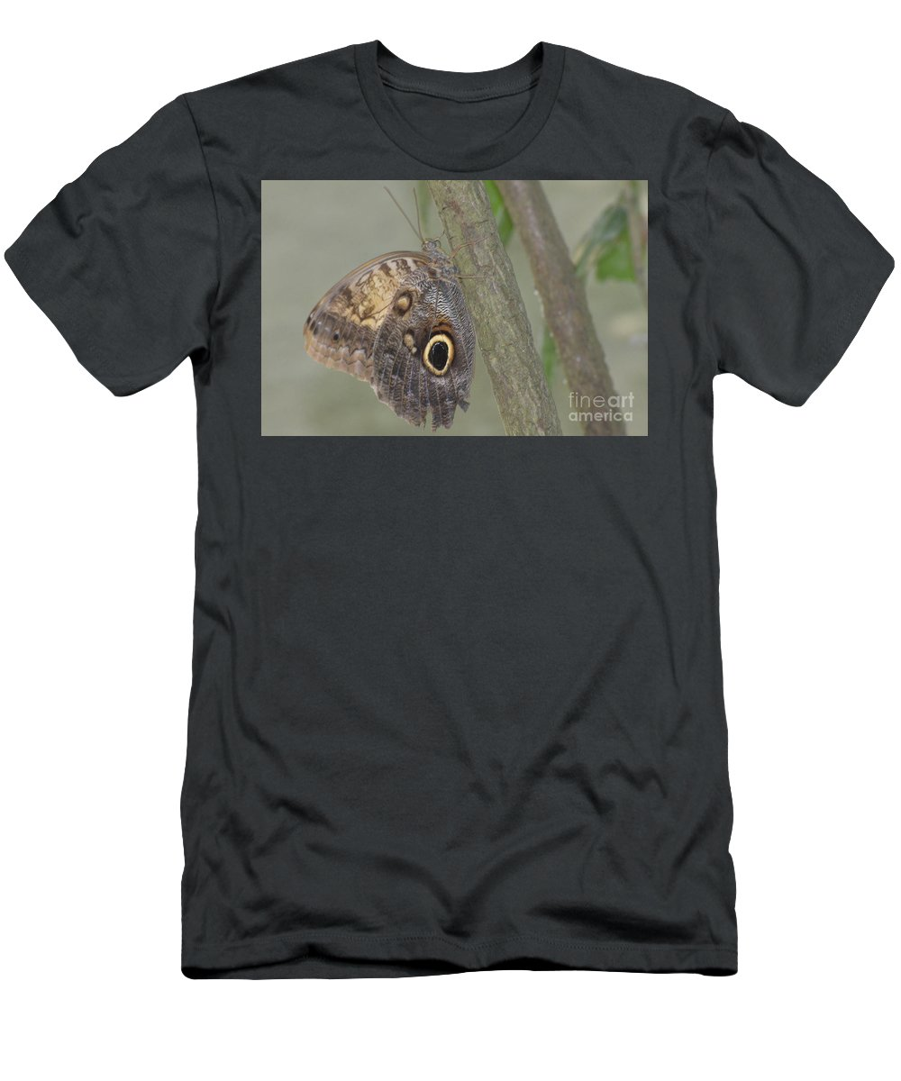 Blue Morpho Men's T-Shirt (Athletic Fit) featuring the photograph Captivating Photo Of A Brown Morpho Butterfly by DejaVu Designs